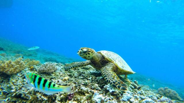 Quatro boas atitudes para ajudar o oceano