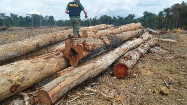 Governo aplicou R$ 36,3 milhões em multas contra queimadas e desmate