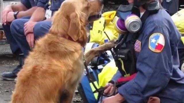 Cadela salvou vidas no 11 de Setembro e o tributo chegou agora