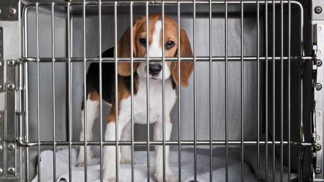 Cães e gatos resgatados em Brumadinho serão colocados para adoção