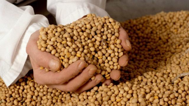 Brasil prevê safra recorde de grãos; alta de 31,1%