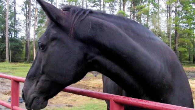 Em 10 dias Anvisa deve receber pedido de registro de soros de cavalos