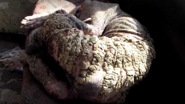Cadela abandonada por causa de sarna passa por transformação. Veja!