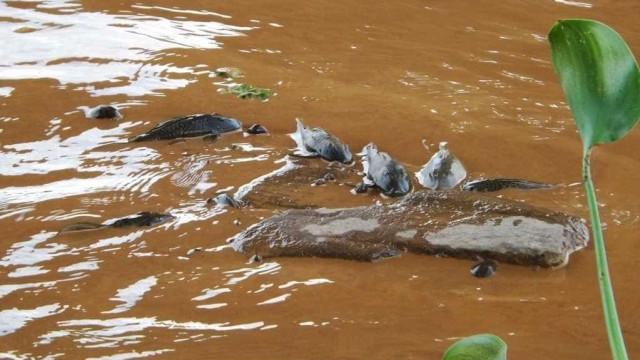 Após matar 16 toneladas de peixes, Belo Monte é multada em R$ 8 milhões