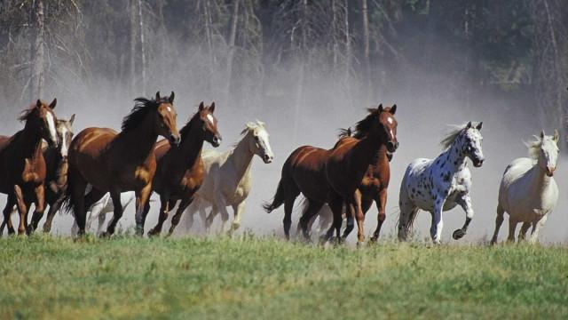 Garçom atropelado por égua que fugiu do Jockey Rio tem morte cerebral