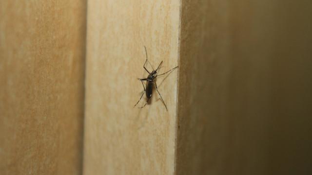 País já registrou 710 mortes por dengue este ano, 256 em SP