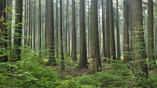 ONU quer que até 2030 as áreas protegidas cubram 30% da Terra
