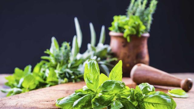 Seis alimentos ricos em ácido fólico. Entenda a sua importância