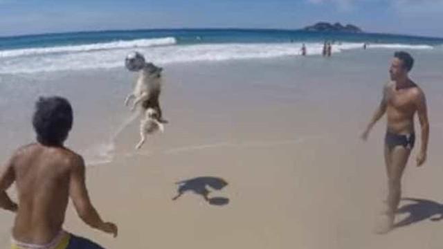 Cachorro joga 'altinha' com banhistas em praia do Rio; assista