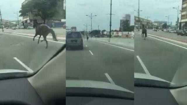 Cavalo é flagrado correndo em rodovia na Malásia