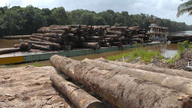 MPF quer investigar presidente do Ibama por novas regras de exportação de madeira