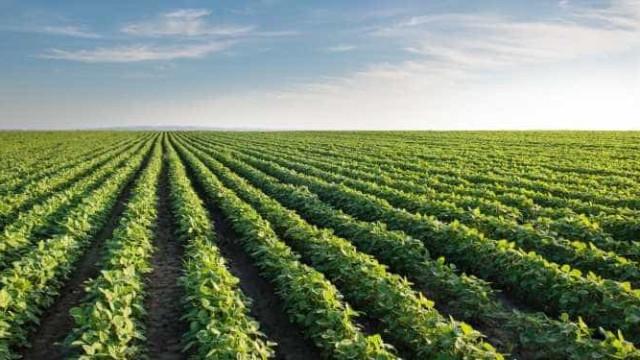 Revolução agrícola no Brasil foi realizada usando 8% das terras, diz Bolsonaro