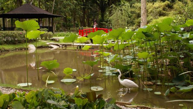 Livraria carioca lança guia sobre riqueza da flora do Jardim Botânico