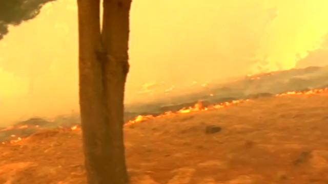 Incêndios florestais colocam Chile em alerta; assista