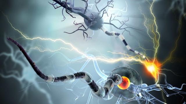 Proteína liberada em exercícios melhora memória em ratos com Alzheimer