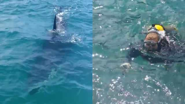 Mergulhador tem encontro inesperado com baleias assassinas