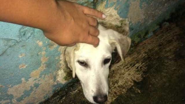 Cão é resgatado após prender cabeça em buraco na parede em São Paulo
