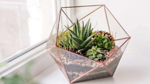 Jardim em miniatura: aprenda todas as dicas para fazer o seu!