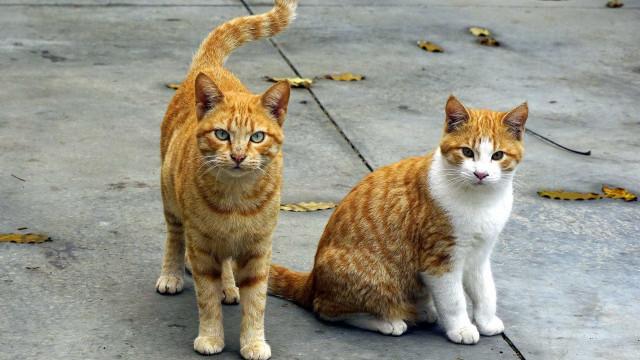 Mulher mantém 40 gatos em apartamento e causa discórdia entre vizinhos