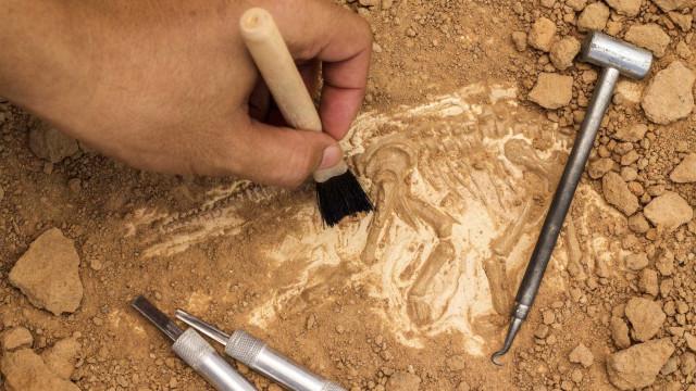 Plesiossauro com 72 milhões de anos é descoberto na Angola