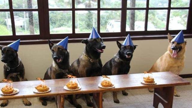 Cães da PM comemoram aniversário com direito a bolo e velinhas