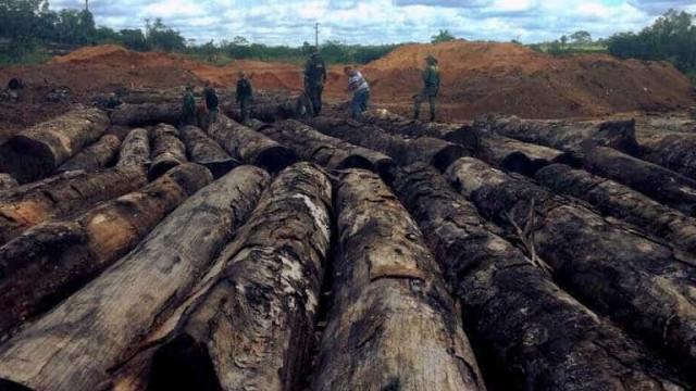 Ibama doa madeira a indígenas para construção de casas