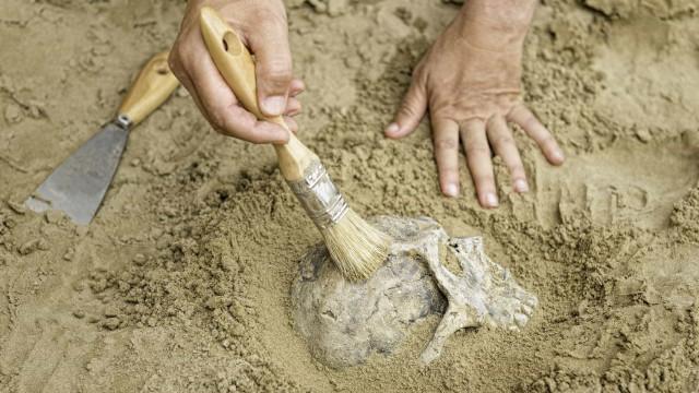 PF abre operação contra tráfico de fósseis no Ceará e prende dois em flagrante