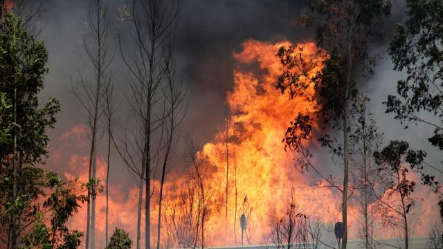Onda de calor faz florestas da região central de Portugal pegarem fogo