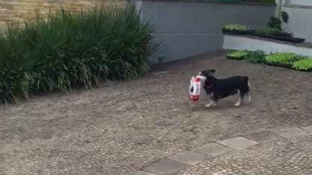 Vídeo de cãozinho que compra sua própria ração viraliza na Web