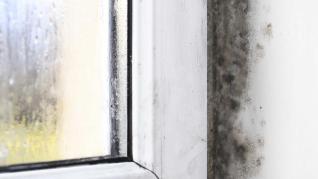 Mofo em casa prejudica quem já tem problemas respiratórios