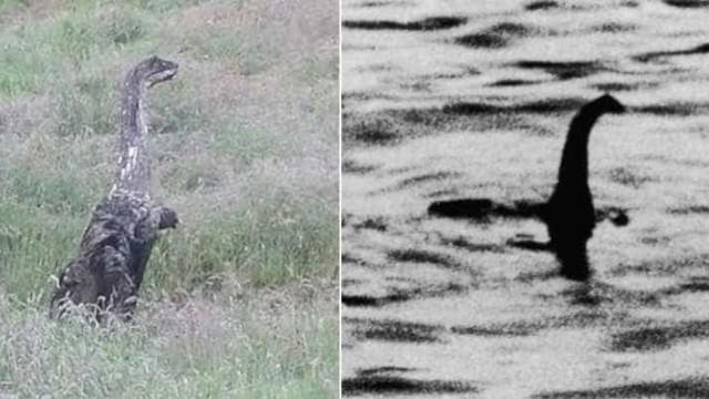 Criatura semelhante a 'monstro do  Lago Ness' é flagrada na Escócia