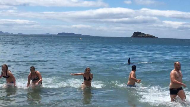 Banhistas fogem de quatro orcas que nadam à beira-mar