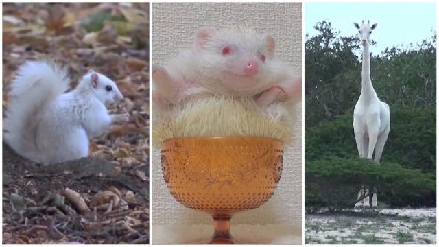 Animais albinos: uma rara e exótica beleza