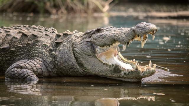 Jovem é atacada por crocodilo durante mergulho à noite no México
