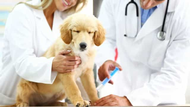 Saiba como manter a saúde e a rotina dos pets no frio
