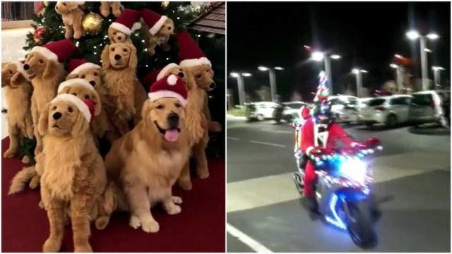 Vídeo mostra uma compilação repleta de momentos natalinos