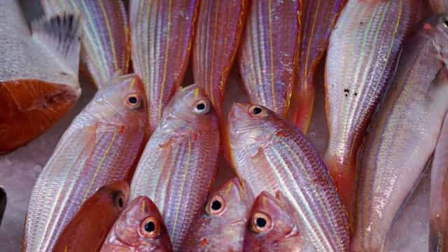 Brasil deixa de exportar pescado para União Europeia