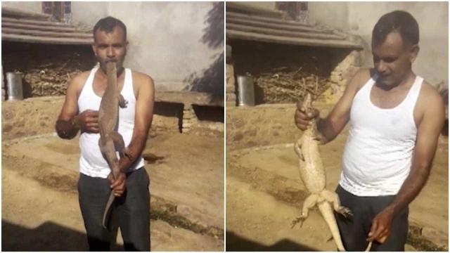 Bizarro: homem coloca lagarto de 60 cm na boca