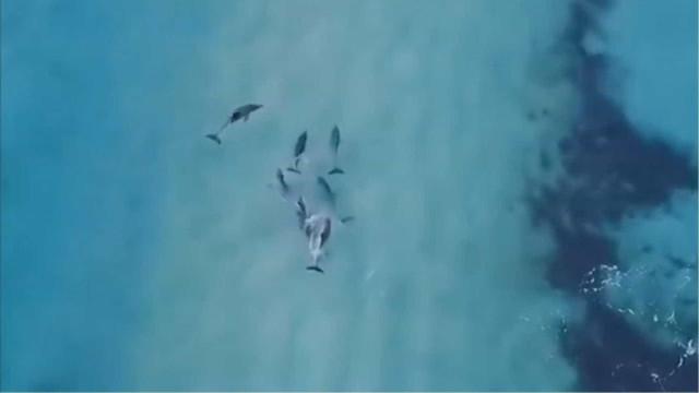 Drone mostra golfinhos 'pegando onda' na costa australiana
