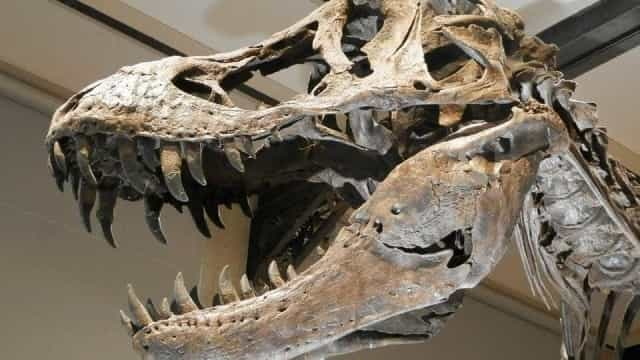 Identificado primeiro dinossauro predador que viveu no interior de SP