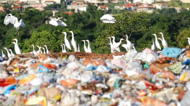 Desabamento em Lixão mata pelo menos 14 pessoas em Moçambique