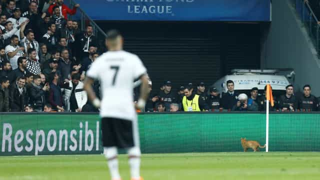 Besiktas será julgado pela Uefa após gato invadir campo na Champions