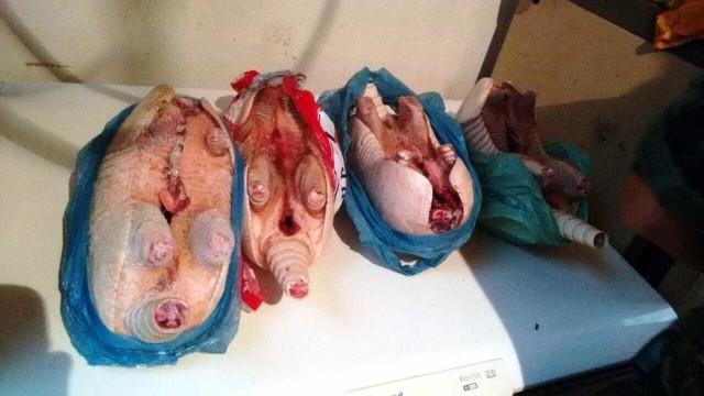Loja clandestina vendia carne de tatu e cigarros do Paraguai em SP
