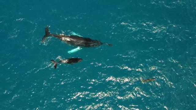 Golfinho ameaçado é descoberto em Paraty