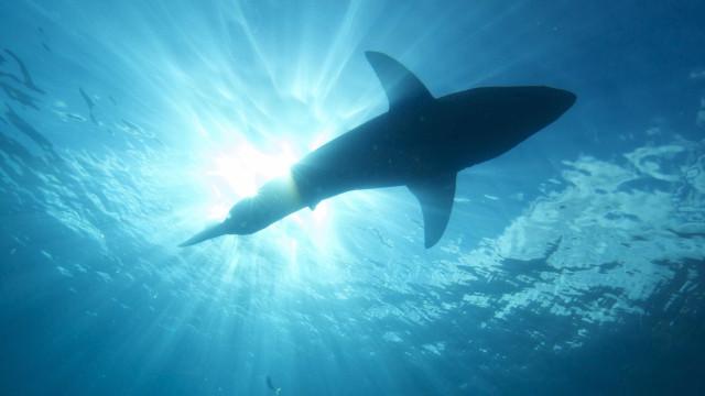Surfista morre após ataque de tubarão em conhecida praia australiana