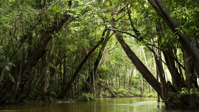 Orçamento previsto para o Meio Ambiente em 2021 é o mais baixo do século, diz ONG