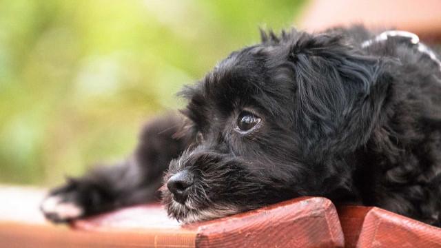 'Doutor Chumbinho' ameça donos de cães no interior de São Paulo