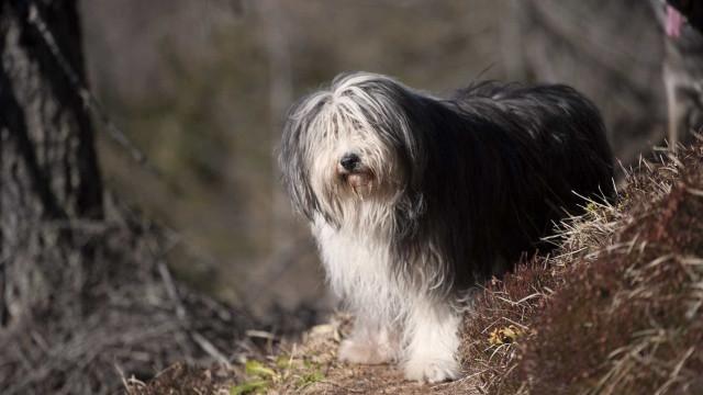 Plataforma ajuda a formar humanos-guias para cuidar de cães cegos