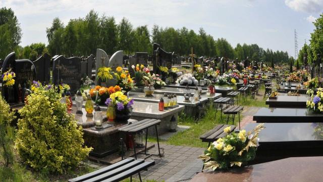 Homem é preso por revender flores furtadas em cemitério no DF; vídeo