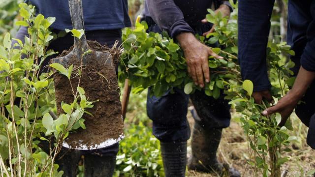 Colômbia usará drones contra plantações de coca